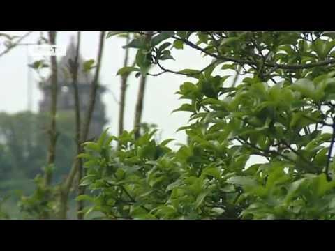 Der neue Botanische Garten in Shanghai | Kultur.21
