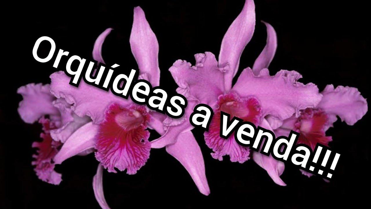 Orquídeas a venda!!!