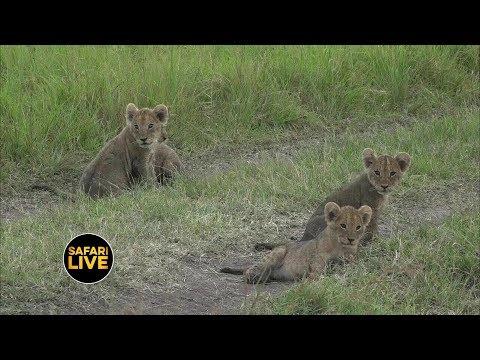 safariLIVE - Sunrise Safari - February 16, 2019