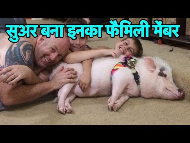 कैसे ये सुअर बना इस परिवार का सदस्य? इंसान और जानवर की दोस्ती की ये कहानी बड़ी ही दिलचस्प है