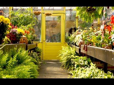 New Gardeneru0027s Guide To Shopping At A Garden Center   YouTube