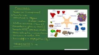 Biología 2º Bach. Tema 4: Proteínas. Ap 4: Funciones, propiedades y clasificación