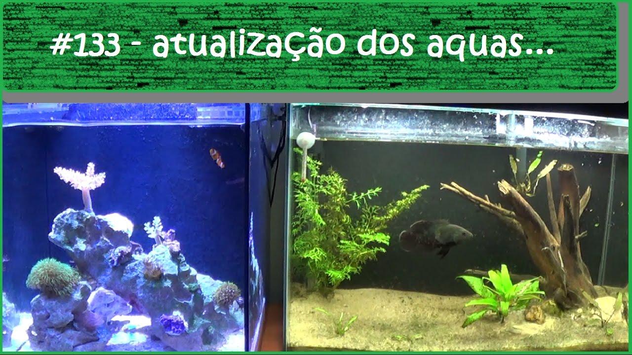 Atualização dos meus aquários - #EP133