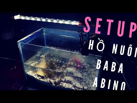 BABA ABINO: Cách setup HỒ NUÔI cho baba làm KIỂNG|Tập 1.