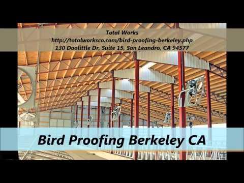 Total Works : Bird Proofing Berkeley