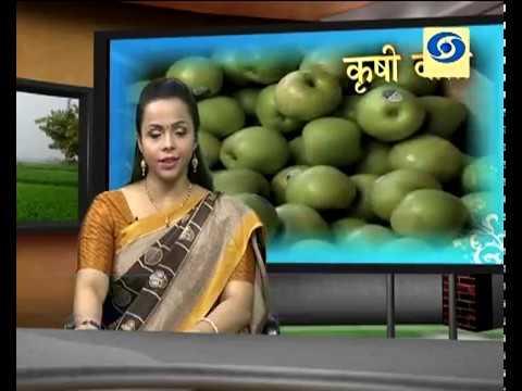 Krishivarta Bajarbhav - 19 July 2018 - कृषीवार्ता बाजारभाव