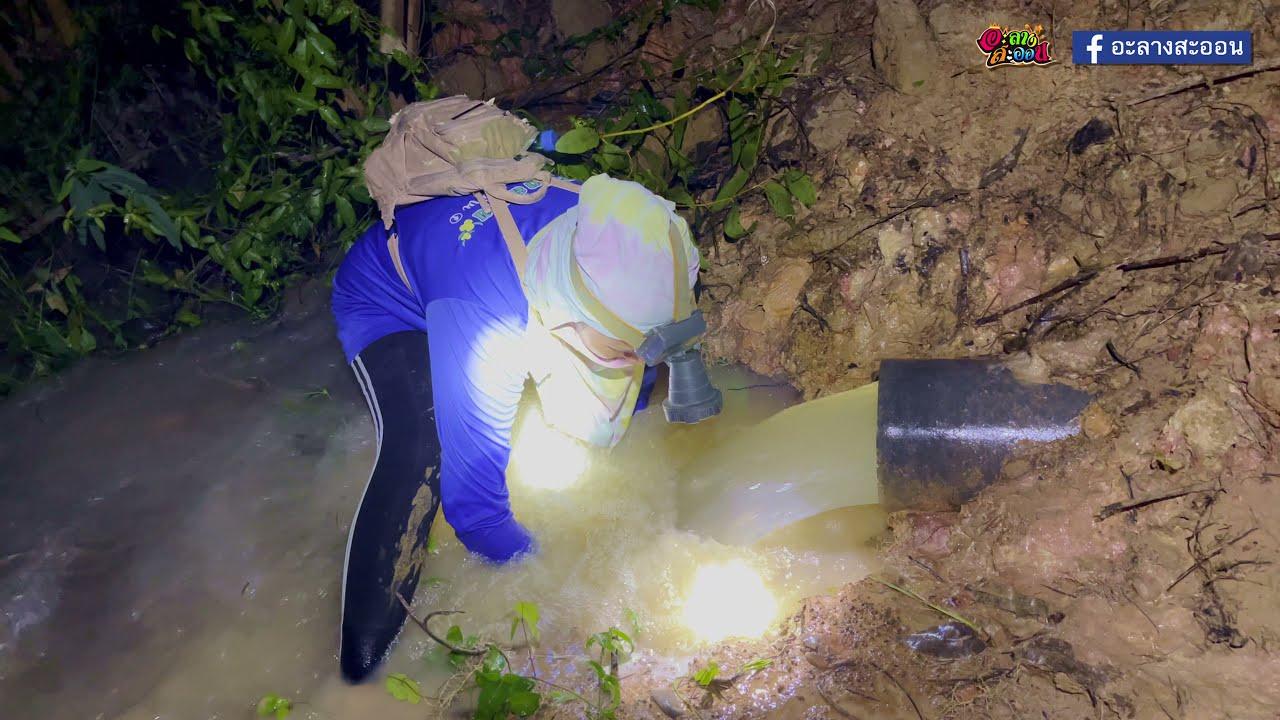 กินข้าวป่าใต้แสงจันทร์ น้ำหลาก ปิ้งปลาหอมๆ ได้บรรยากาศ 24 กันยายน 2564