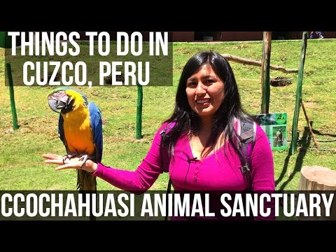 Cuzco, Peru: Ccochahuasi Animal Sanctuary. Day Two (Vlog 28)