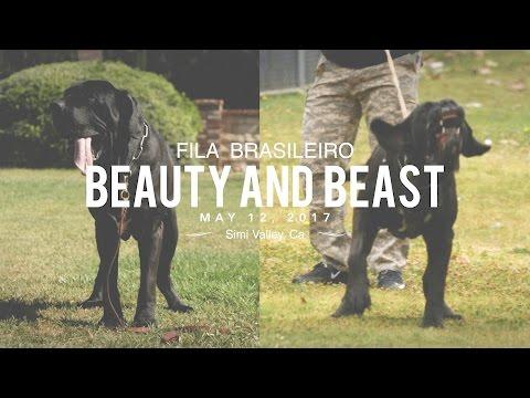 FILA BRASILEIRO A BEAUTY AND A BEAST