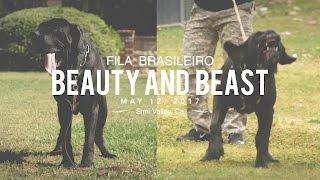 FILA BRASILEIRO A BEAUTY AND A BEAST thumbnail