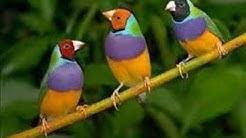 وثائقي// اجمل طيور في العالم Documentaire // plus beaux oiseaux dans le monde