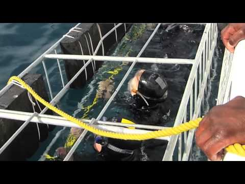 Meeting the Great White Shark off the coast of South Africa, June 2014