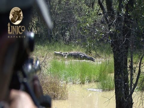 Crocodile & Plains-game    -    Unico Safaris - South Africa