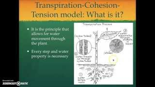 Transpiration-Cohesion-Tension Model