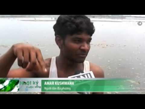 VTC14_Ấn Độ: Ô nhiễm trên sông Hằng khiến cá chết hàng loạt