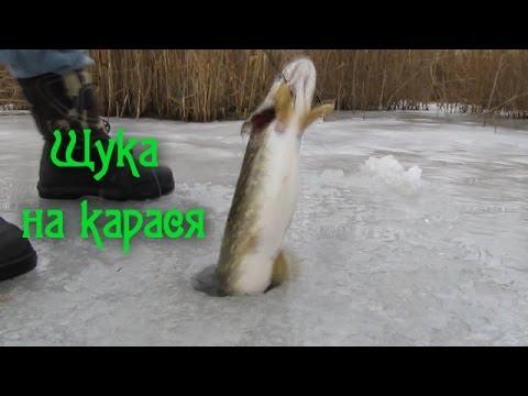 Ловля щуки зимой на жерлицы відео рибалка зима 2015 Pike Fishing Winte  (отчеты о рыбалке)