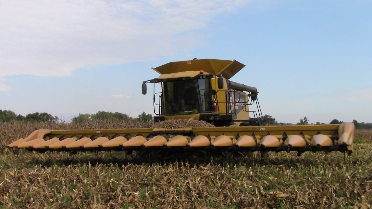 Caterpillar Lexion 570R Combine with a C516 16 Row Corn Head