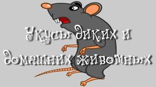 Укусы диких и домашних животных - Неотложная помощь доктора Комаровского