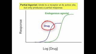 Agonist, Antagonist, Partial Agonist, Inverse Agonist