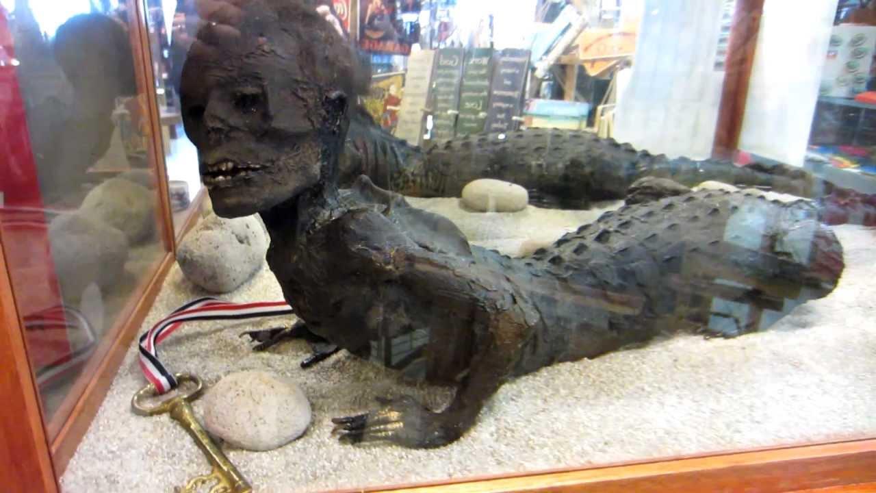 Half human half crocodile