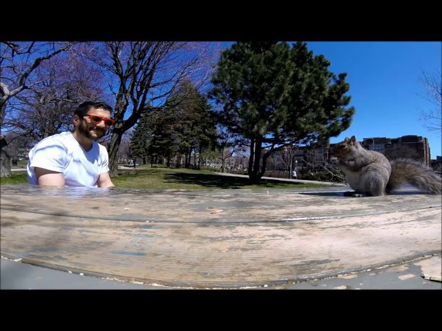 Picnic interrupted by a squirrel (squirrel steals GoPro Session)