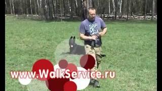 видео курсы дрессировки собак