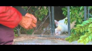 日食记:第八回 猫背 thumbnail