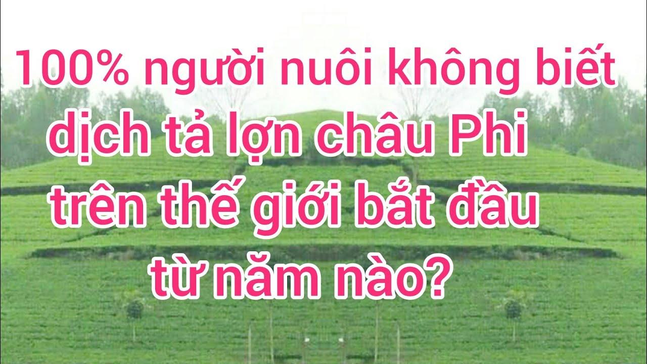 Dịch tả lợn châu Phi trên thế giới, VIỆT NAM bùng phát từ năm nào | 100% người nuôi đều trả lời sai