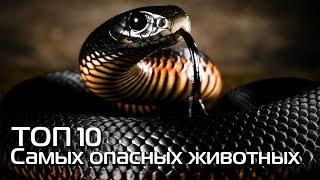 ТОП 10. Самые опсаные животные нашей планеты