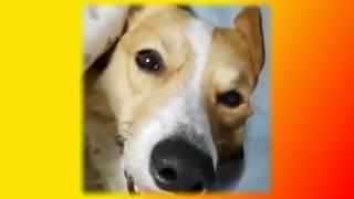 Прикольные и смешные животные Видео Для детского просмотра Создай себе хорошее настроение