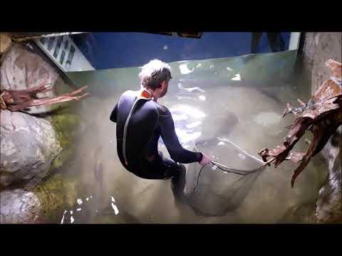 Tigerfish Attack HD