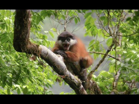 Conserving Biodiversity In Central Africa