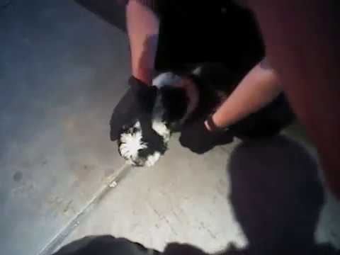 NM officers save choking puppy