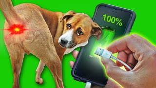 This dog leash CHARGES your phone!!!?