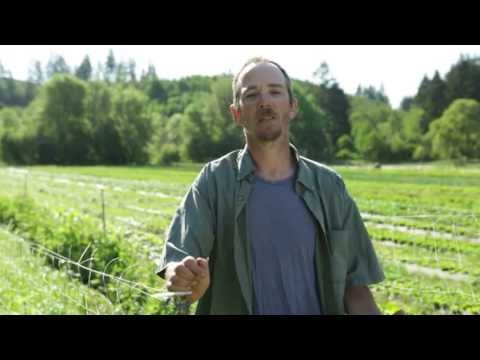 Creative Growers Organic Farm Needs Your Help