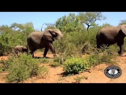 Full Day Safari to Hluhluwe Imfolozi Park, KwaZulu Natal, Magnificent Elephant close Ups