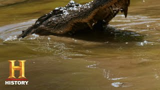 Swamp People: Willie's Alligator Nemesis Bends a Hook (Season 10) | History