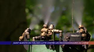 Yvelines | Gare aux chenilles processionnaires dans les Yvelines