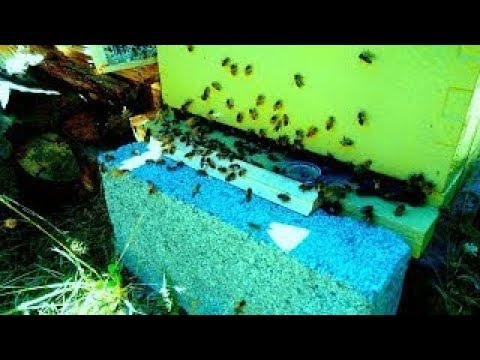 IF YOU HAVE THE TIME WATCH THIS!                              Bees and The Effects of Shungite