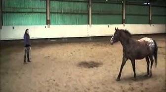 Was Pferde wollen - Beispiel Motiva Übung