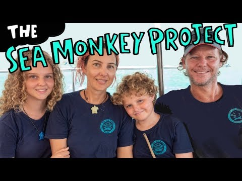 Who Are The Sea Monkeys? And What is The Sea Monkey Project?