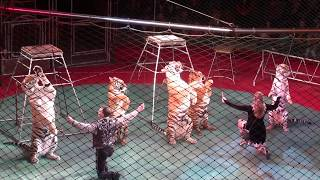 Circus. Tigers and lions. part 2. ����. ����� � ����. 2 �����.