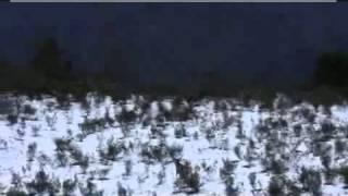 Zimowe polowanie na Jelenia - piękny strzał w uciekającego Jelenia.