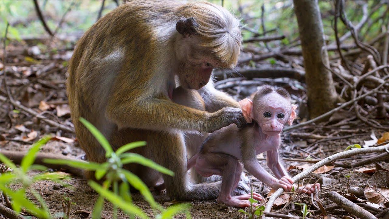 【万物有光】生活在底层的猴子,连孩子都低人一等,太真实了!
