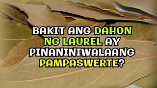 BAKIT ANG DAHON NG LAUREL AY PINANINIWALAANG PAMPASWERTE? #shorts #youtubeshorts #shortvideo