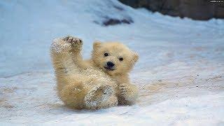 Реакция на первый в жизни снег.  Смешные животные.