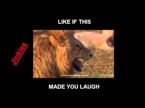 Laughing Lion LMG  Jinkies