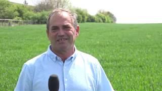 Гранстар Супер, Импакт и Азака - ефективната растителна защита в житни от ФМС