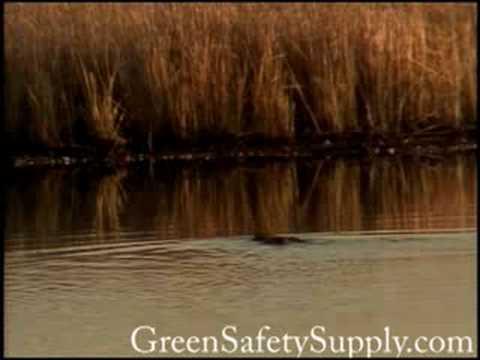 Blackwater Maryland U.S. Wildlife Refuge 2005 part 2 of 2