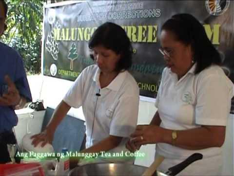 MALUNGGAY COFFEE AND TEA MAKING